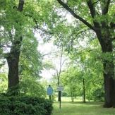 Tótkomlós - Kocsányos tölgyfa
